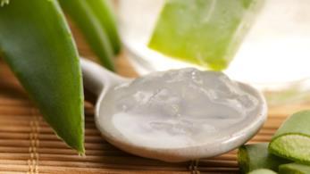 L'aloe vera, un ottimo rimedio naturale