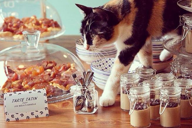 Uno di nove mici che abitano al Crazy Cat Café