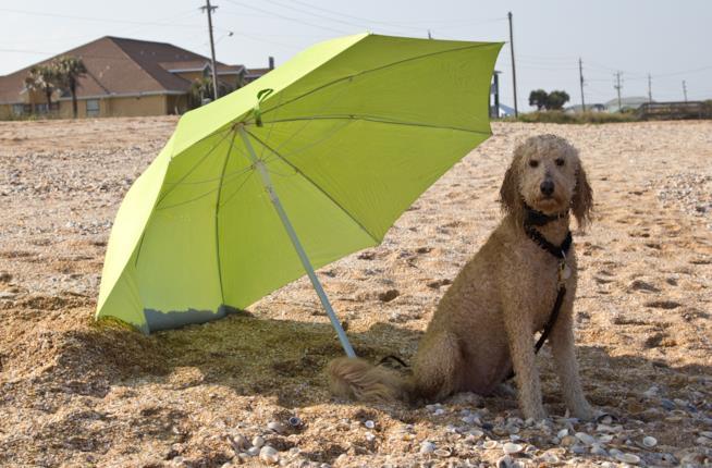 cane sta seduto all'ombra