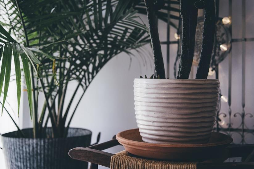 Una pianta grassa ed una palma in vaso