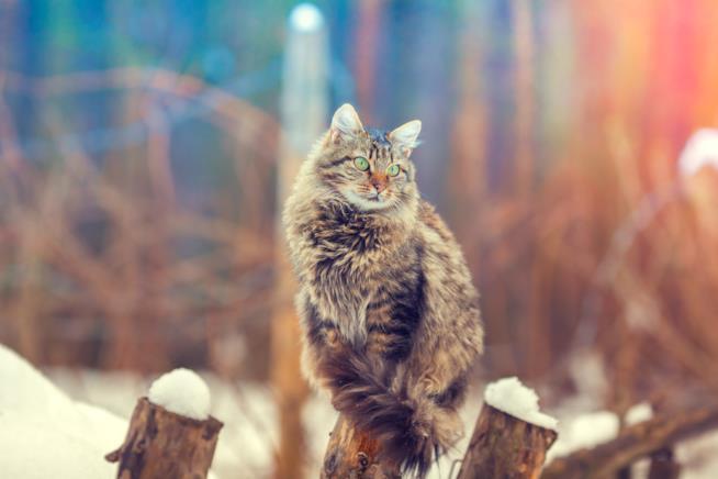 Gatti Le Razze Più Rare Al Mondo