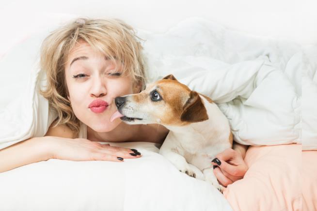 Una donna appena sveglia viene leccata su una guancia da un cagnolino