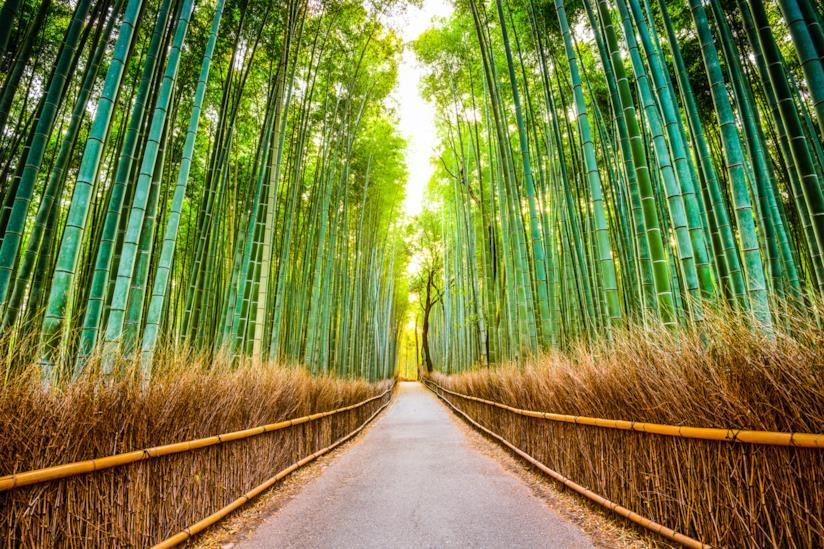 Strada costeggiata dalla foresta di bambù