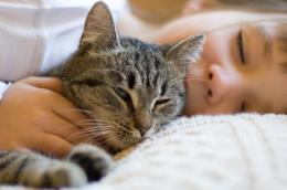 L'immagine di un gatto appisolato vicino al suo padroncino
