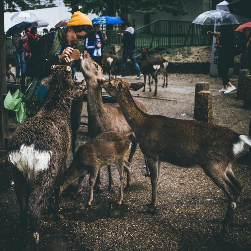 Nara e il parco naturalistico