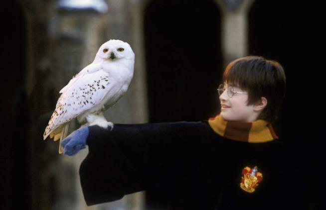 Una scena del film Harry Potter e la pietra filosofale