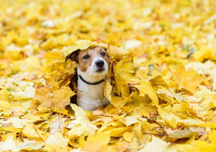Cagnolino tra le foglie cadute degli alberi