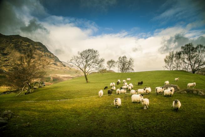 Natura irlandese