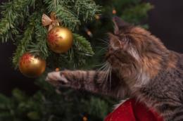 Un gatto gioca con l'albero di natale