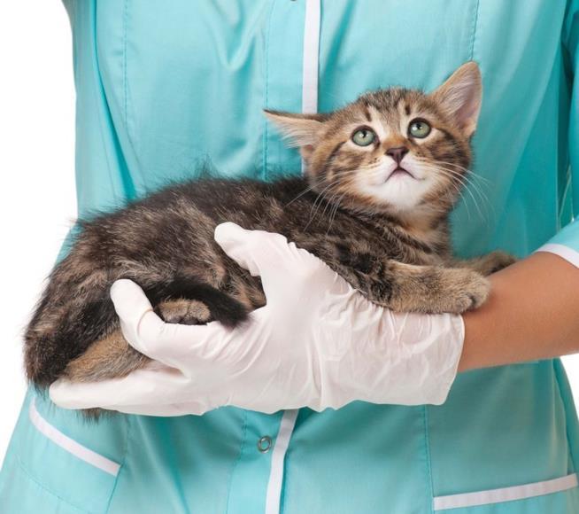 Un gattino tenuto in braccio da un veterinario