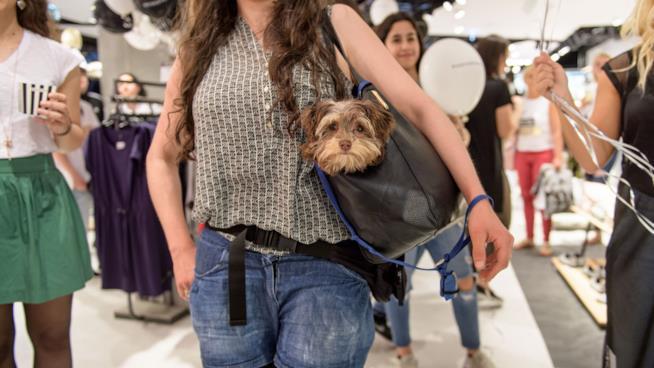 Un cane in una borsa da donna
