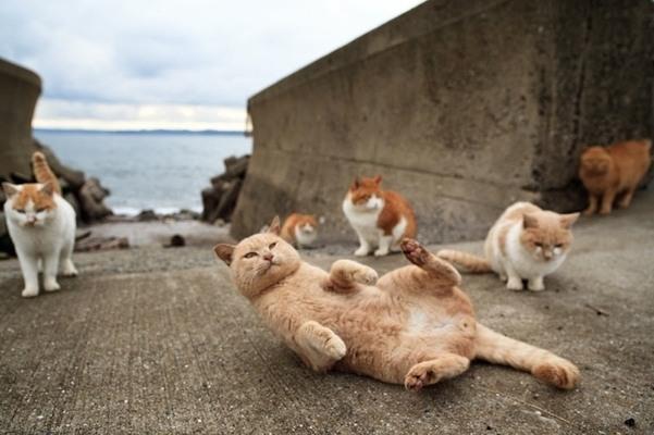 Un'immagine dei gatti di Tashirojima vicino al mare