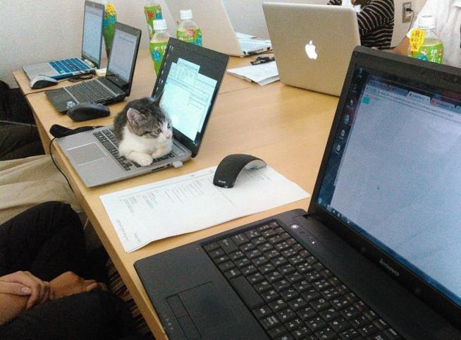 Un gatto alla Ferray Corporation