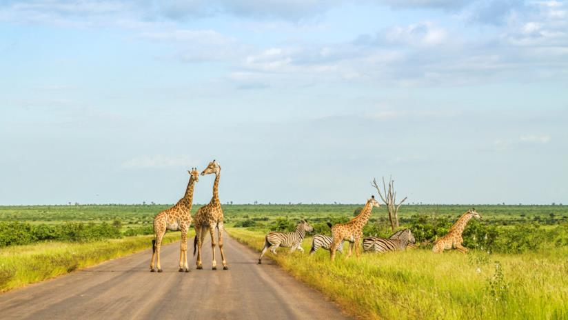 Parco Nazionale Kruger in Sudafrica