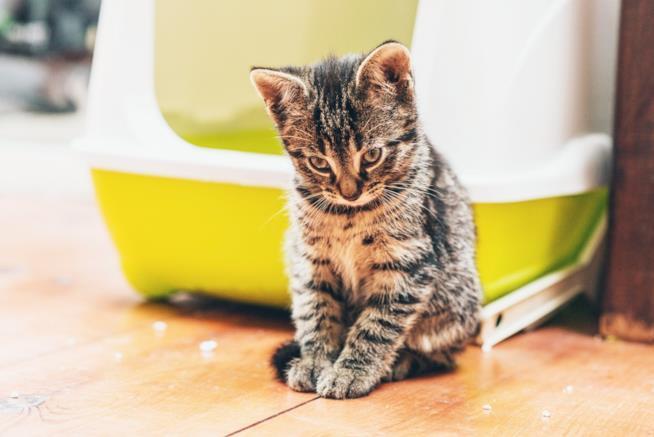 L'immagine di un gattino appena uscito dalla lettiera