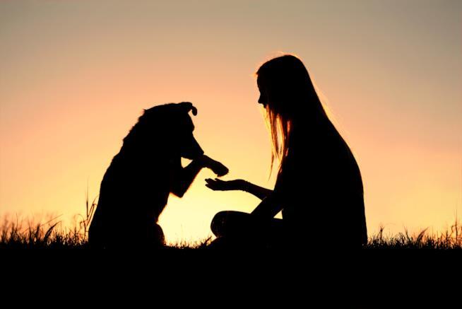 La sagoma di un cane ed una ragazza