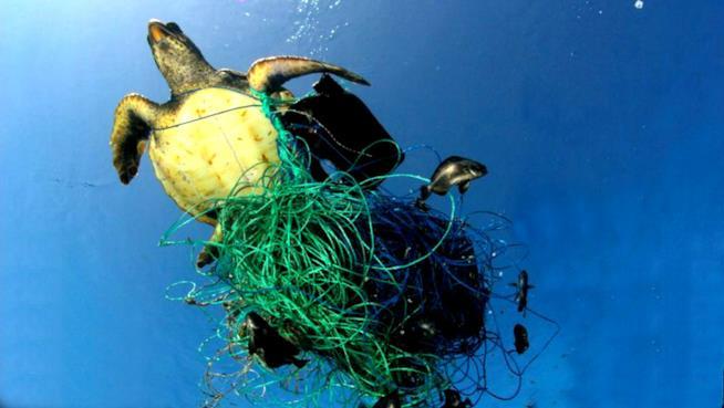 Una tartaruga impigliata nella plastica
