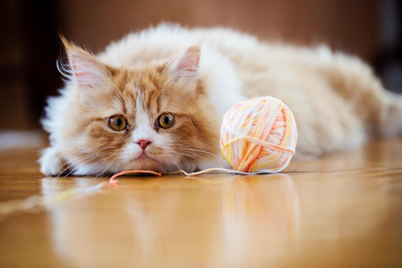 Gatto sdraiato a terra che osserva un gomitolo di lana
