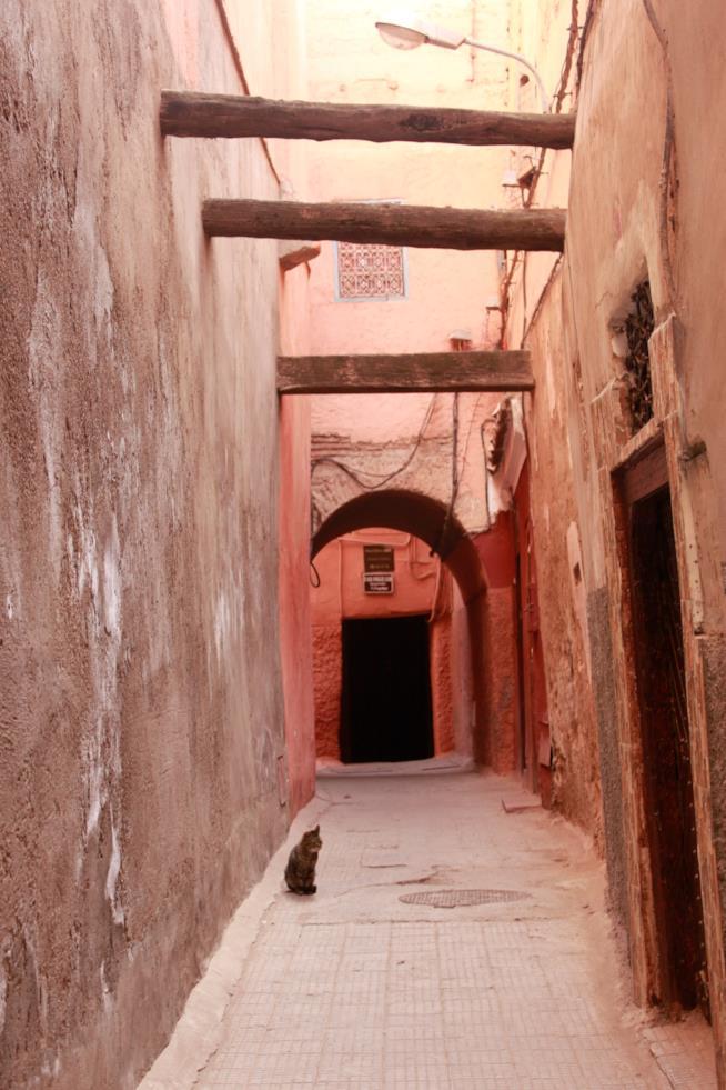 Una stradina rossa di Marrakech, con gatto