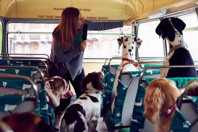 I cani ascoltano la guida sul tour bus a loro dedicato