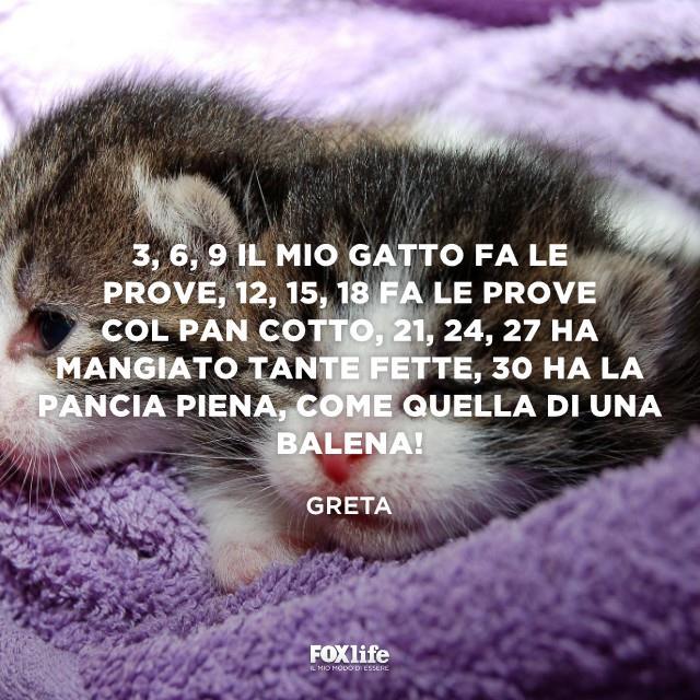Cuccioli di gatto dormono in una coperta
