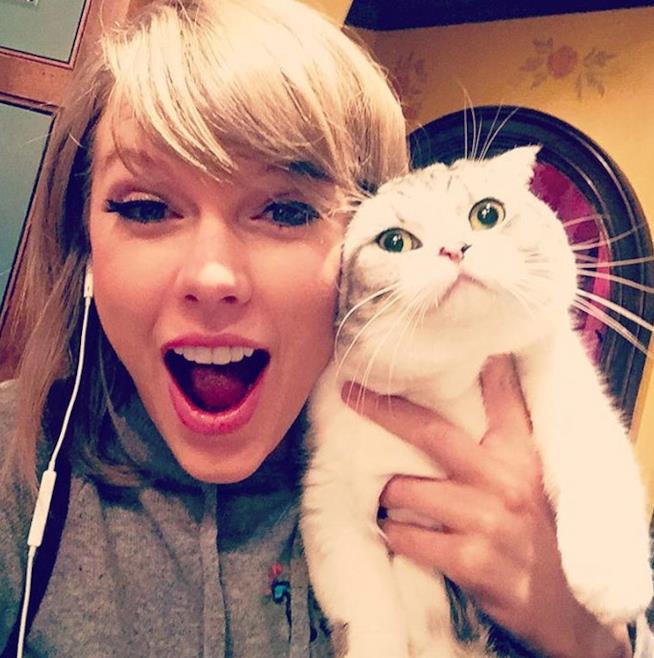 taylor Swift in un selfie con un gatto bianco