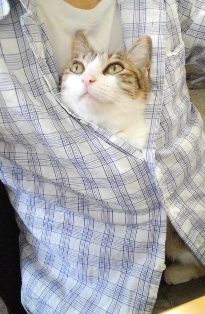 Un dipendente della Ferray con un gatto