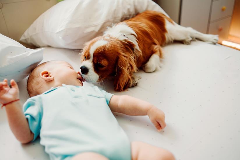 Cucciolo lecca il viso di un neonato