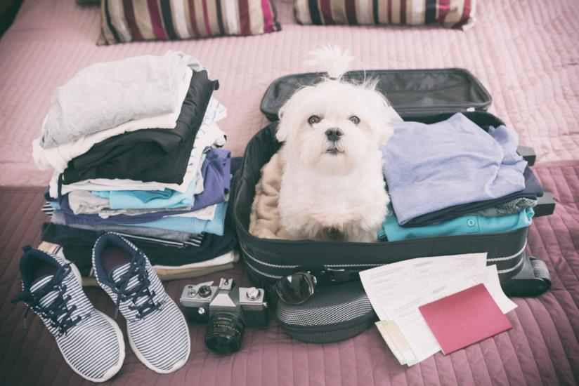 Cane nella valigia