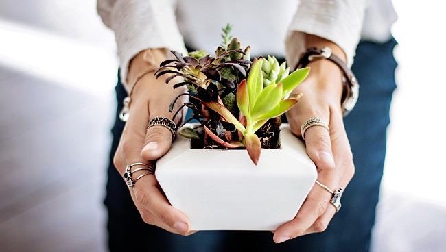 Innaffiare le piante grasse in vaso o piantate all'esterno