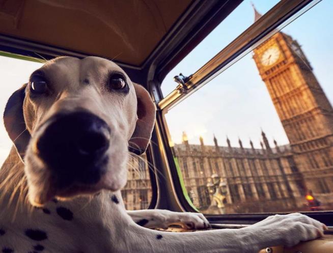 Il bus che a Londra porta in giro i cani e i loro padroni