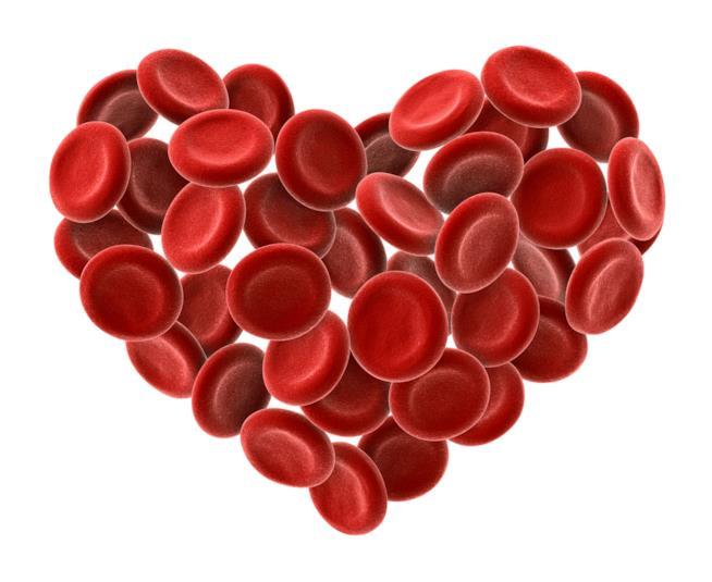 Un cuore formato da cellule del sangue