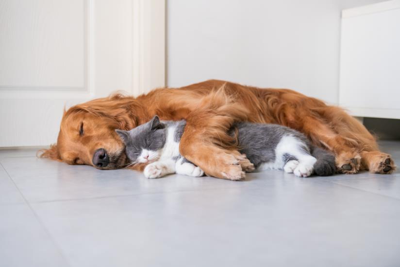 Cane e gatto dormono vicini