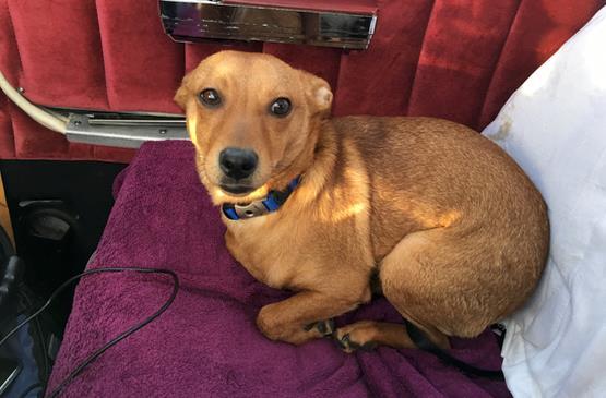 Kendall, cane salvato da Steklenski