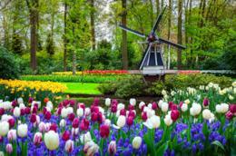 Giardino di Keukenhof, Lisse, tulipani