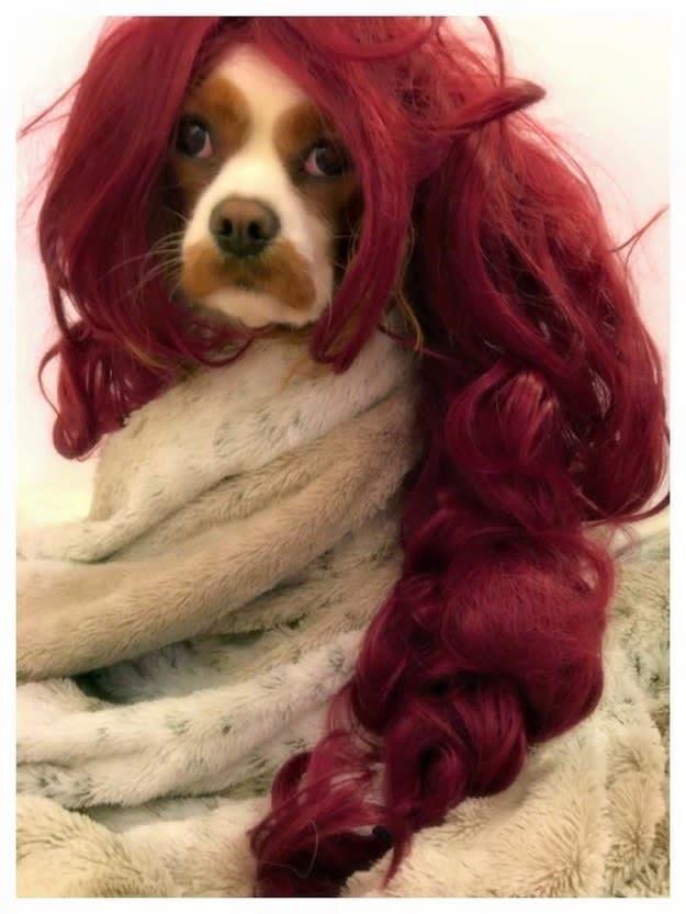 Sansa Stark in versione...canina!