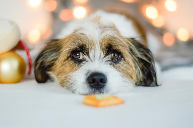 Primo piano del muso di un cane