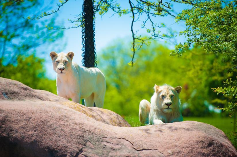 Lo zoo di Toronto