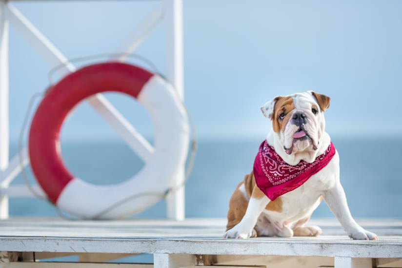 Migliori spiagge per cani in Italia