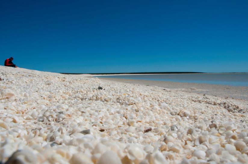 70 km di conchiglie sulla spiaggia: è Shell Beach in Australia, nella Shark Bay