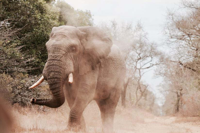 Dove andare per un safari in Africa
