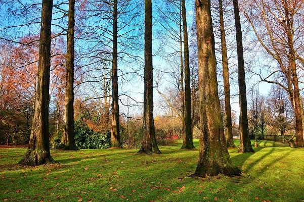 Alberi in un parco