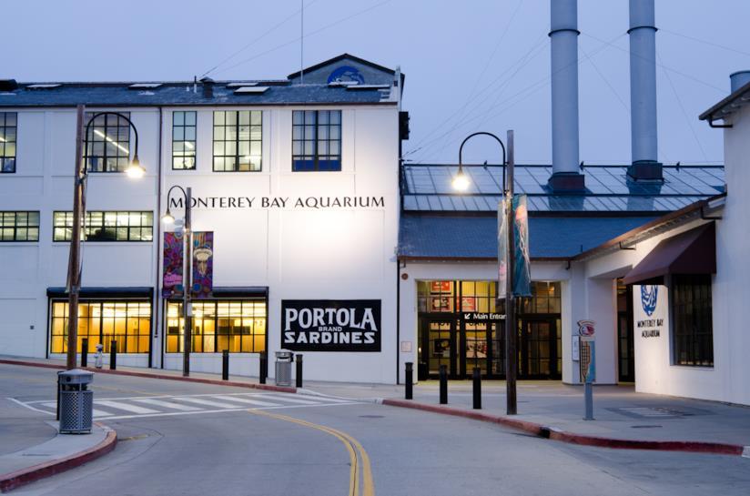I 10 acquari più spettacolari al mondo da visitare: Monterey Bay Aquarium, USA