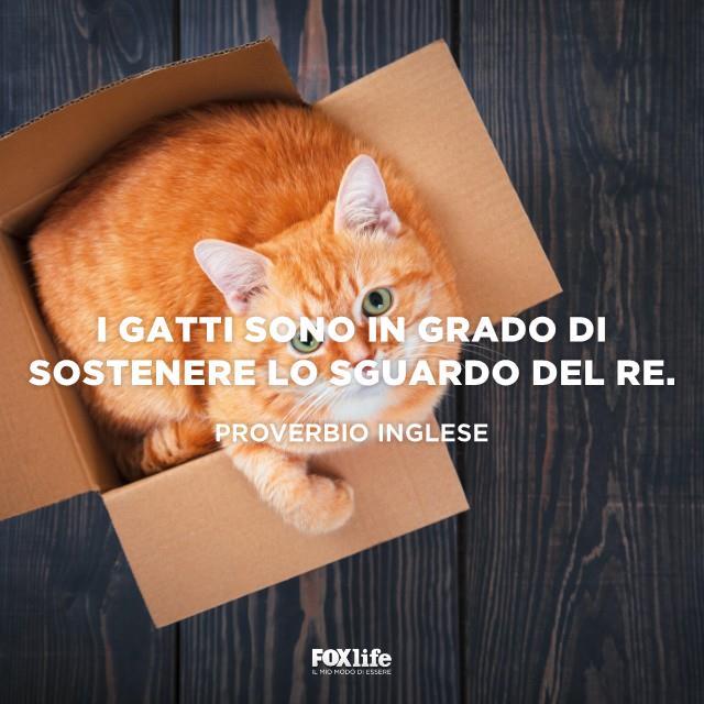 Gatto seduto in una scatola di cartone