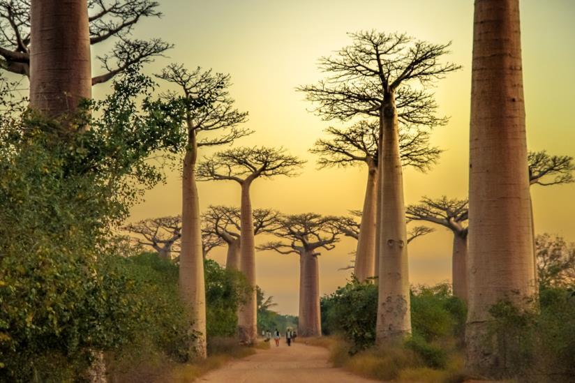 Maggio in Madagascar