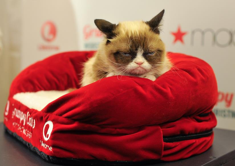 Grumpy Cat è scomparsa a metà maggio
