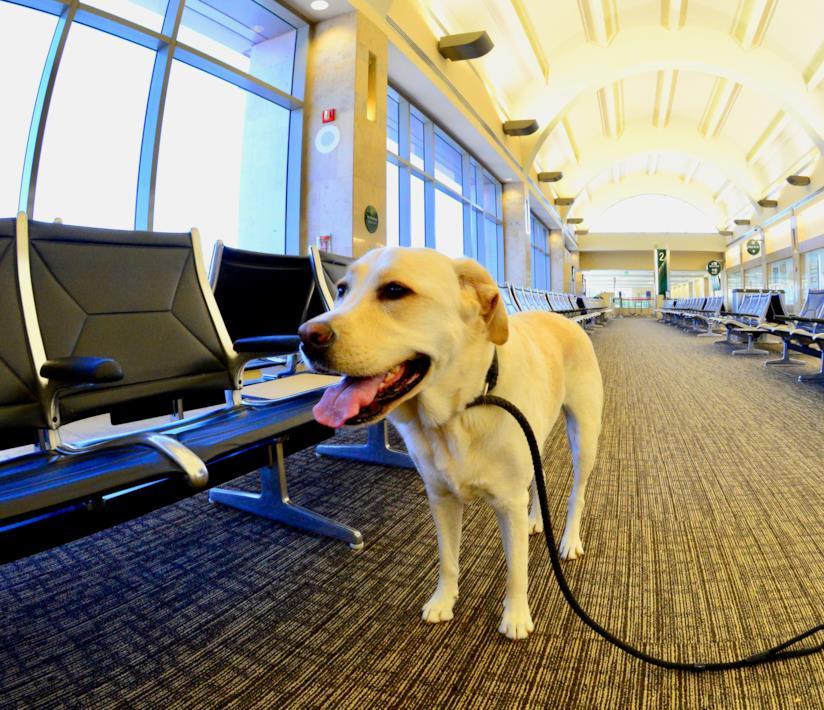 Cane in aeroporto