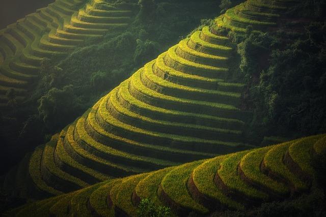 Risaie Vietnam