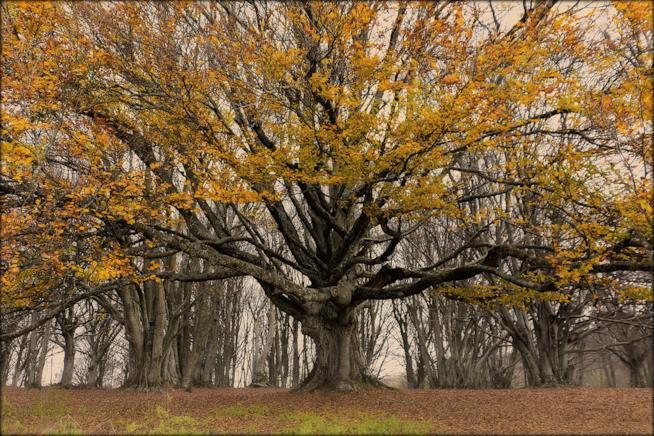 Il bosco di Canfaito