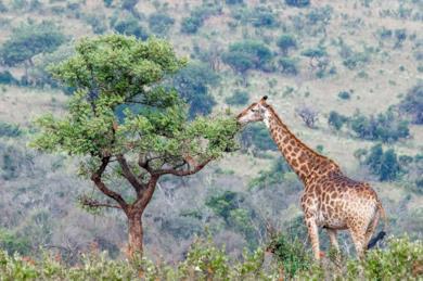 Tour del Sudafrica - Safari al Parco Kruger e in Swaziland